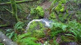 Waterfall on South Pender Island Stock Image