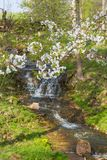 Waterfall in spring Royalty Free Stock Image