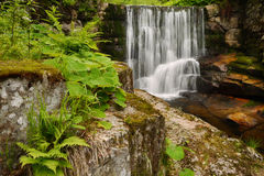Waterfall and spring green vegetation. Forest stream with a waterfall and spring green vegetation royalty free stock images