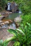 Waterfall on Sri Lanka Royalty Free Stock Images