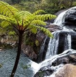 Waterfall on Sri Lanka Stock Photography