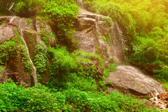 Waterfall on stones and green plants Stock Photos