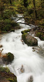 Waterfall and stream. In the forest. Jiuzhaigou. China stock photography