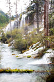 Waterfall and stream. In the forest. Jiuzhaigou. China royalty free stock photos