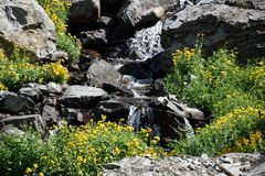 Waterfall with sunflowers in mountains. Waterfall with wild sunflowers in Challis national forest Idaho, Wildflowers and boulders surround this peaceful mountain Royalty Free Stock Image