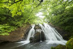 Waterfall surrounded by forest. Meisui waterfall surrounded by fresh green forest in Oita Stock Image