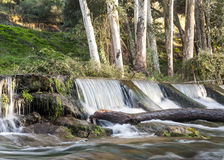 Waterfall surrounded by trunks Royalty Free Stock Photography