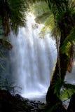 Waterfall in Tasmania Royalty Free Stock Image