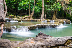Waterfall with timber log scenic natural Stock Image