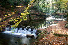 Waterfall in Tollymore forest park Royalty Free Stock Image