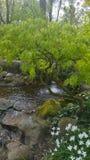 Waterfall with tree Stock Photo