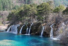 Waterfall with trees at Jiuzhaigou Stock Photos