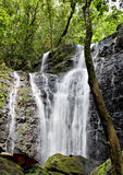 Waterfall in a tropcial forest in Tahiti Royalty Free Stock Photography
