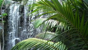 Waterfall in tropical forest. Waterfall in a tropical forest stock video footage