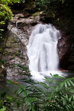 Waterfall in a tropical forest Stock Photography