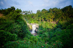 Waterfall in tropical forest in Bali Stock Photos