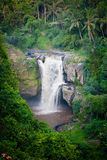 Waterfall in tropical forest in Bali Royalty Free Stock Photo