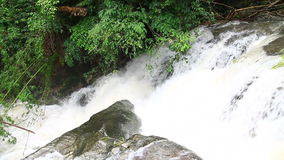 Waterfall in tropical forest. Green forest stock video