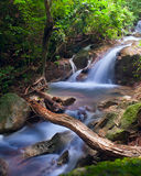 Waterfall in tropical forest Stock Photography