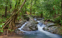 Waterfall in tropical forest Stock Images