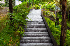 Waterfall in tropical garden in Madeira Stock Images