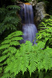 Waterfall in tropical garden Stock Images