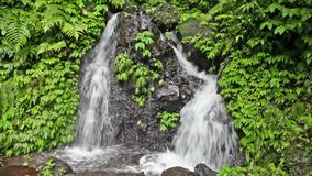 Waterfall in the tropical jungle Stock Images