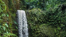 Waterfall in tropical jungle with lush green plants. High humidity stock video footage