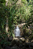 Waterfall in the tropical jungles Stock Image