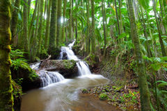 Waterfall in Tropical Palm Forest royalty free stock photography