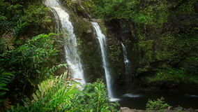 Waterfall in Tropical Paradise. Tropical waterfalls in the lush forest of Maui, Hawaii. Shot on HD 1080P stock video