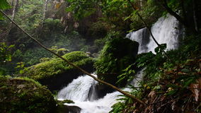 Waterfall in the tropical rain forest. HD