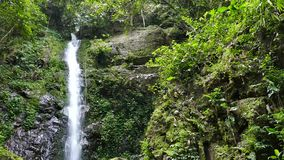 Waterfall in tropical rain forest. stock video