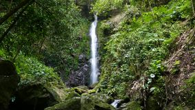 Waterfall in tropical rain forest. stock footage