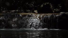 Waterfall in tropical rain forest. Waterfall in tropical rain forest, slow motion stock video