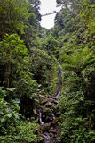 Waterfall in the tropical rainforest Stock Image
