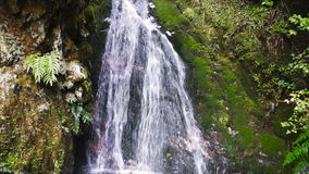 Waterfall in tropical rainforest, New Zealand. Secluded waterfall in tropical rainforest. Fiorland National Park, New Zealand stock footage