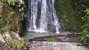 Waterfall in tropical rainforest, New Zealand. Secluded waterfall in tropical rainforest. Fiorland National Park, New Zealand stock video