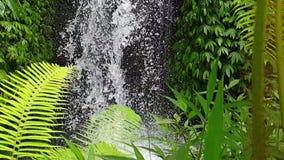 Waterfall in Ubud, Bali stock video footage