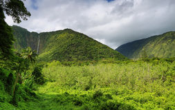 Waterfall in Waipio Valley Royalty Free Stock Image