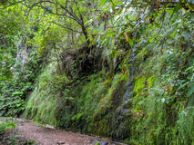 Waterfall. Water flows into the Levada in Madeira Stock Photos