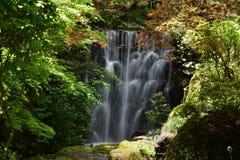 Waterfall, Water, Nature, Vegetation stock image