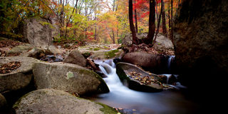 Waterfall and water stream in the colorful forest Royalty Free Stock Image
