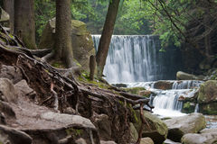 Waterfall wild boar Stock Images