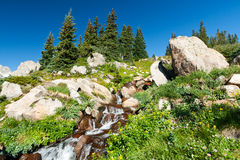 Waterfall and Wildflowers Mountain Landscape Stock Image