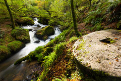Waterfall in the Woods Stock Image