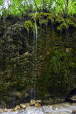 A waterfall in a WWF oasi. Shooting of a waterfall in a WWF oasi Royalty Free Stock Photos
