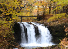 Waterfall in the yellow forest. Waterfall and the yellow forest in Japan Stock Photos
