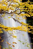 Waterfall with Yellow Leaves in the Fall stock image