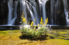 Waterfall and yellow plant Royalty Free Stock Photography